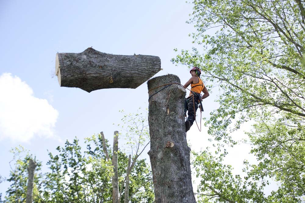 Image of Tree Removal by worker
