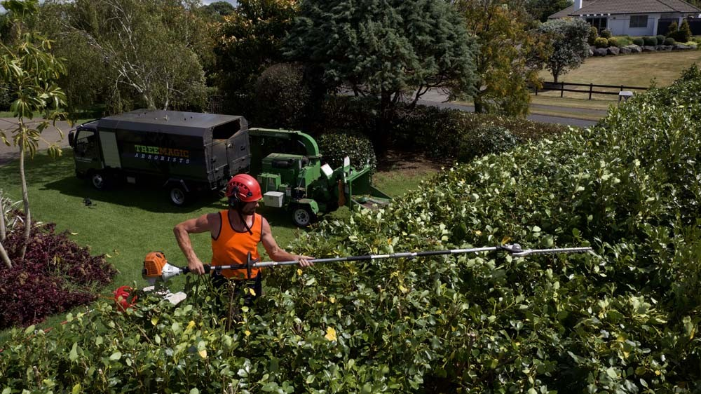 Image of worker trimming the hedge