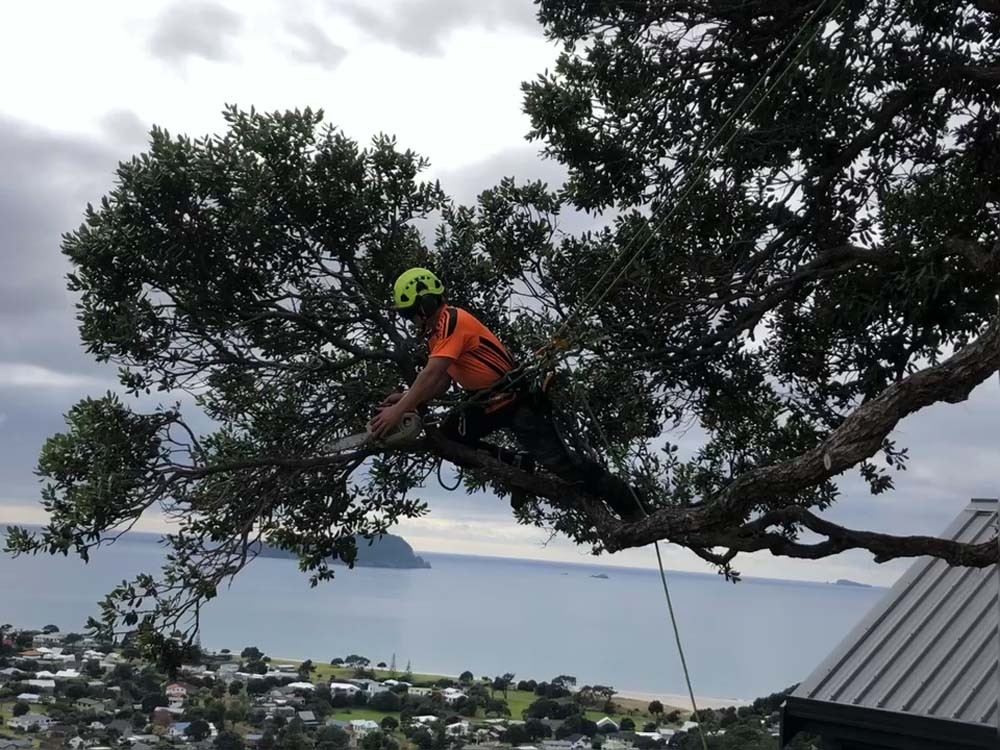 Image of Tree Pruning by worker